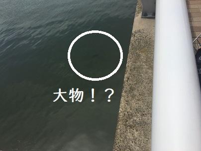 川に大物!?